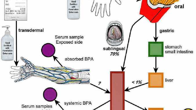 EXPLAINED: A flow chart showing the relationship between dockets, hand sanitiser and BPAs in the body.
