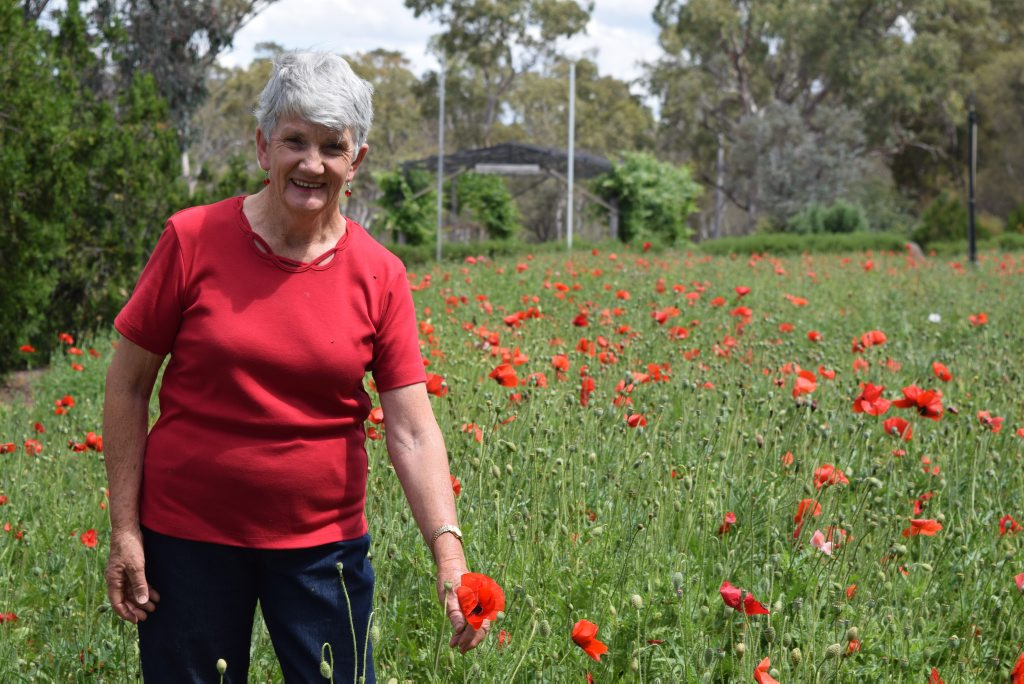 Fay Helwig Remembrance Day poppies. Photo: Hayden Smith / Stanthorpe Border Post