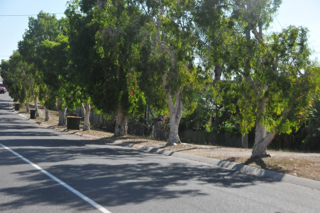 This vista of paperbark gum trees on Pacific Avenue in Tannum Sands will soon be erased to make way for a concrete footpath.
