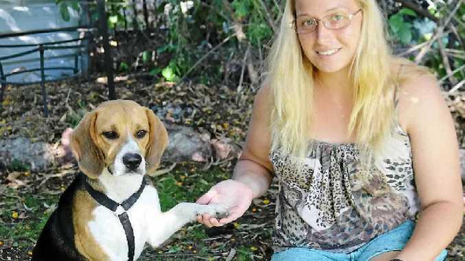 "FUN: Kayla Schmidt, with her beloved beagle Charlie, has organised a ""beagle meet""."