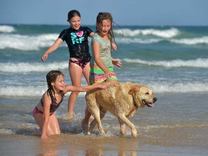 (L-R) Ella and Lily Pugh and Jenaya Clea, cool off in the ocean at Currimundi with Sandy the labrador after a scorching hot day on the coast. Photo: Brett Wortman / Sunshine Coast Daily