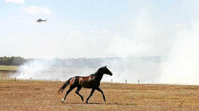 Flames and smoke stirred up horses as the fire spread into a paddock owned by Lyndhurst Stud.