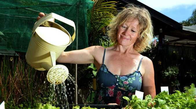 Vanessa James is watering the frilly Pink lettuce. Photo: John Gass / Tweed Daily News