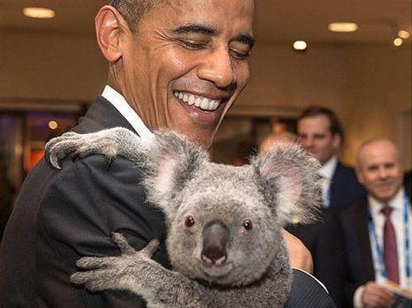 Barack Obama with a koala during Brisbane's G20 summit.