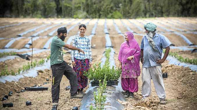 TRUE BLUE: Raj, Kirandeep, Harish and Amrik Rana have bought the old Kentucky Stud and are planting a blueberry farm. Photo: Adam Hourigan