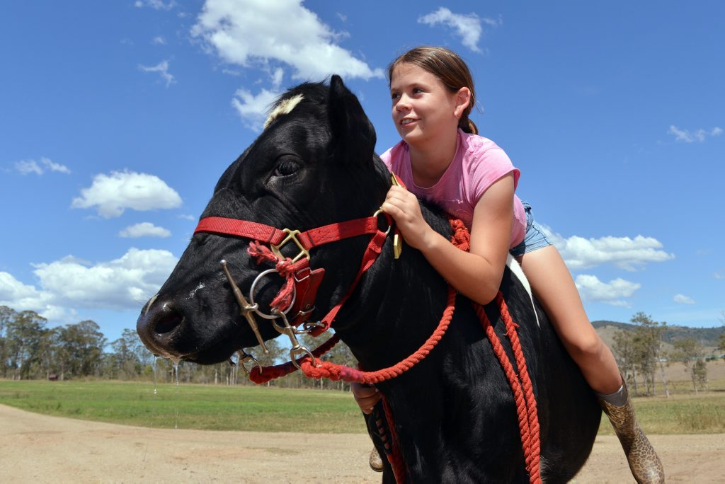 13 year old Gympie State HighSchool student Meagan Neumann riding Mia the 18 month old Friesian Heffer on Day Dawn property at Theebine. Meagan has been riding cows since she was 4 years old. Photo Greg Miller / The Gympie Times