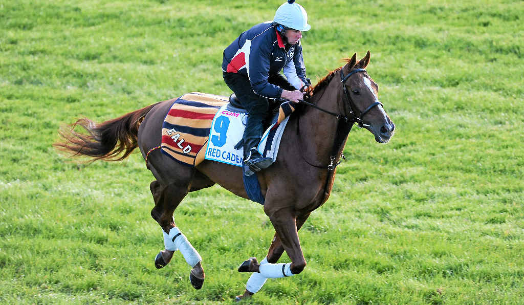 Red Cadeaux will get another crack at the Melbourne Cup.