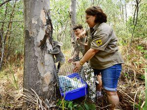 Koala Release