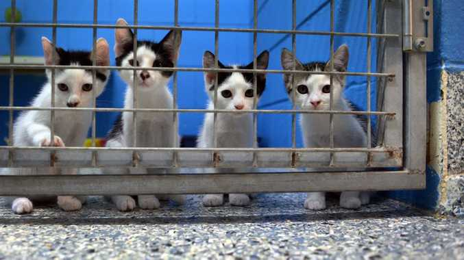 Image of: Animal Cruelty Adoption Campaign The Rspca Has Number Of Animals Up For Adoption At The Animal News Mail Rspca Shelters Filled To Capacity With Cats And Dogs News Mail