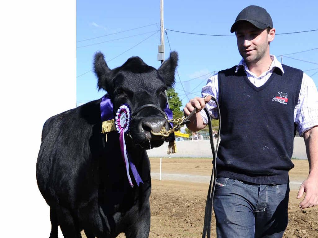 "COUNTRY LAD: Phillip Hughes with his champion cow ""Island Vicki"" at the 2012 Grafton Show."