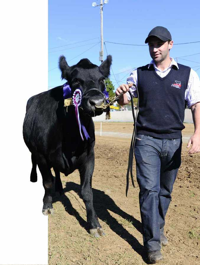 """COUNTRY LAD: Phillip Hughes with his champion cow """"Island Vicki"""" at the 2012 Grafton Show."""
