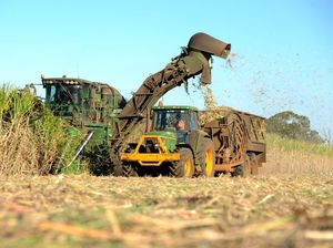 Cane growers look to the sky as price drops