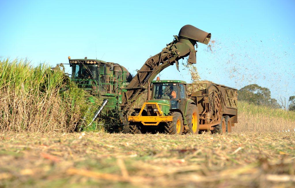 Cane harvest.
