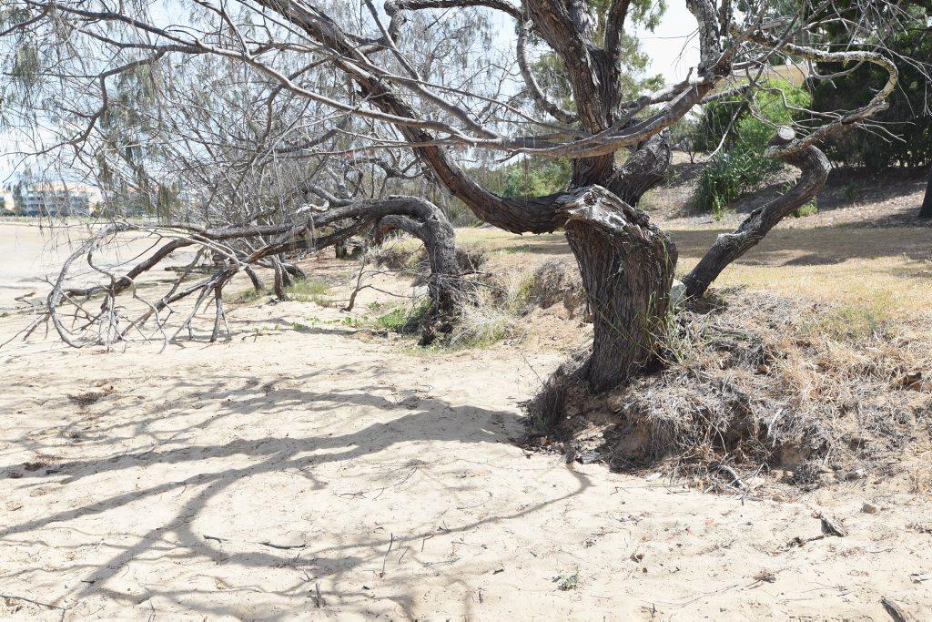 Erosion on the beachfront at Urangan near Dayman Park.