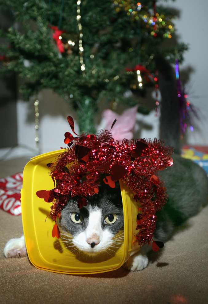 Pet lovers are being encouraged to spare a few dollars to assist animal shelters this Christmas.
