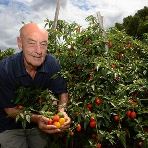 Chilli Industry Heats Up At The Channon Rural Weekly