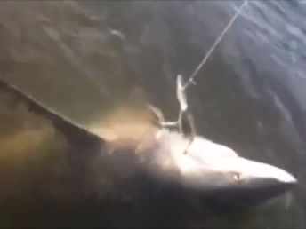 fisherman snares shark while fishing on Fitzroy River in kayak