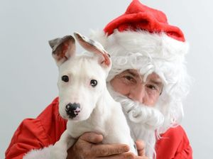 RSPCA desperate for carers over holidays