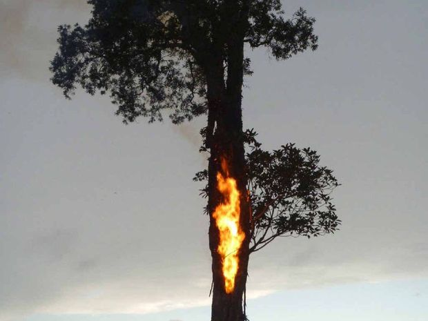 DIRECT HIT: The tree hit by lightning bursts into flames on fire on Jacqui Green's Woodford Island property. Photo Contributed
