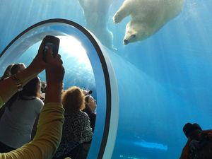 Love polar bears? Watch them in motion floating overhead