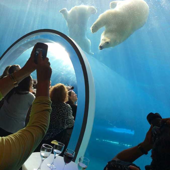 Polar bears are the main attraction at Assiniboine Park Zoo