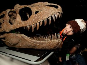 Dinosaur exhibit visitor numbers tick over 20,000