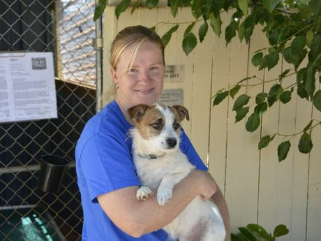 ANIMAL LOVER: Giving Keeba the Jack Russell a big cuddle is RSPCA Shelter Manager Cassie Ellis Photo Nick Houghton / The Chronicle