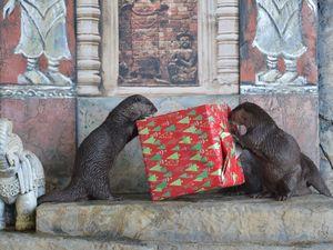 Sea Life Otters