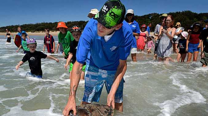 BACK TO THE WILD: Ben Nadler from Australian Seabird Rescue releases Shelayne the green sea turtle at Flat Rock.