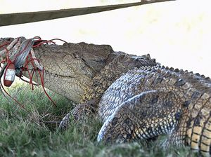 Search continues for crocodile lurking in Mary River