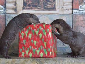 Why we 'otter' have Christmas all the time