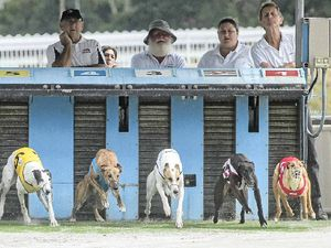LETTERS: Let the greyhounds run