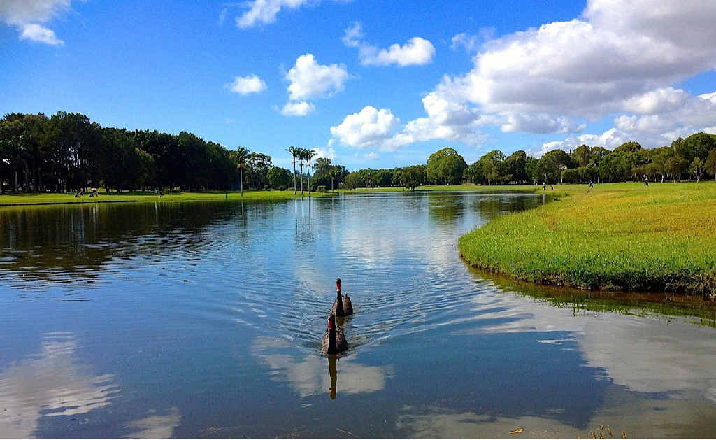 DAYS NUMBERED: There is no shortage of wildlife at Horton Park, including 10 black swans.