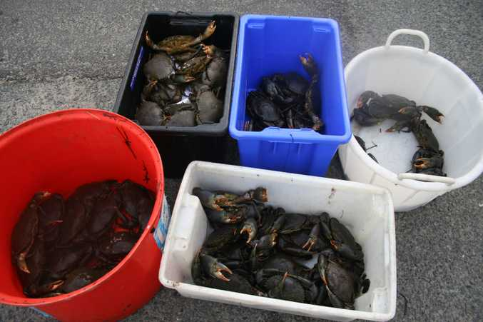 Crack down on crab pot interference