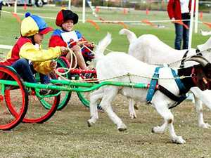Goat races at Chinese New Year