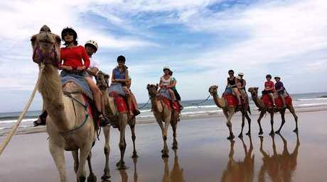 Take a camel ride on Boambee Beach this summer.