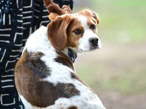 Dogfight results in Peregian Pet Resort shut down
