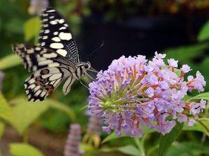 Butterfly blizzard a joy for Coast community