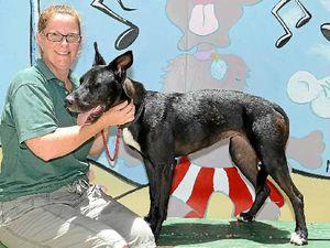 'Big goofy dogs' like Tasha need a new home too