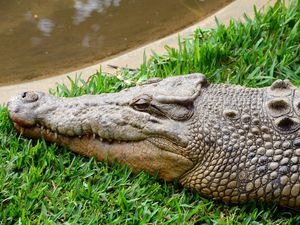 Reptile park owner attacked by croc owes life to colleague
