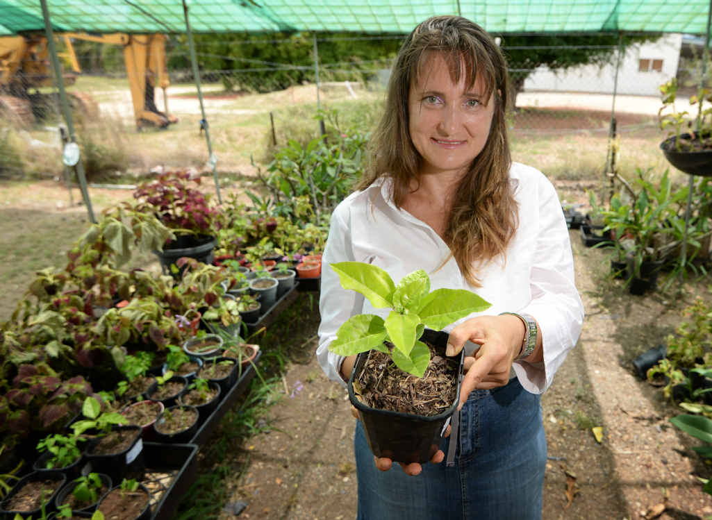 BUSINESS BLOSSOMS: Gracemere resident Rene Grych with a passionfruit seedling in the backyard nursery where she grows fruit, vegetables and flowers for sale.