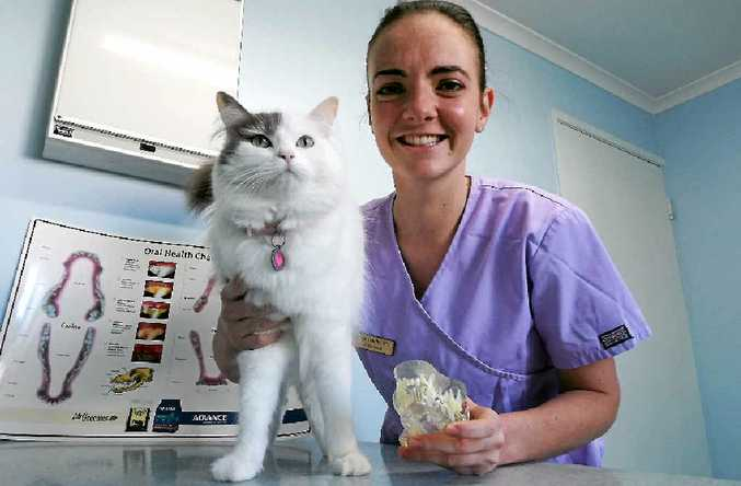 WELL CARED FOR: Veterinarian Dr Kylie Dudley pays extra-special attention to her cat Martha's care.