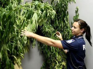 Toowoomba man charged over haul of marijuana plants