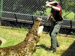 Rocky's croc expert says it was a lucky escape from killer