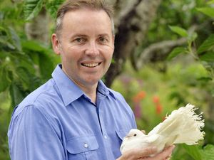 Former MP Sean Choat set to fly the coop to council