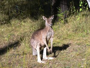 Bike rider injured after hitting kangaroo