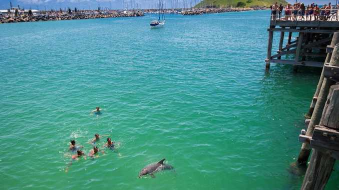 A dolphin swims alongside Jetty jumpers enjoying the summer sun.