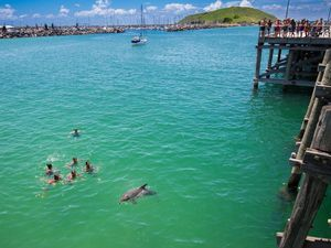 Dolphin makes the day of Jetty swimmers