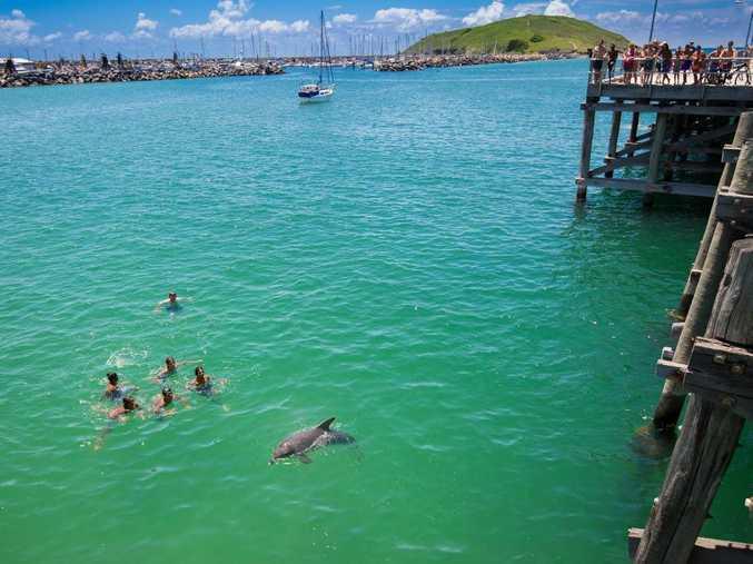 A dolphin swims alongside Jetty jumpers enjoying the summer sun.