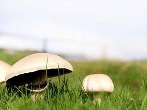 No magic in mushrooms